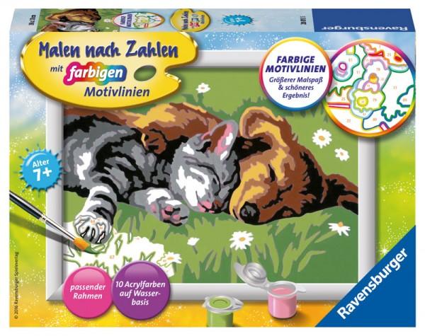 Malen nach Zahlen Tiefer Schlaf Hund und Katze