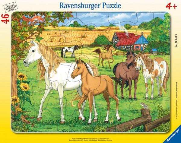 Rahmenpuzzle Pferde auf der Koppel mit 46 Teilen